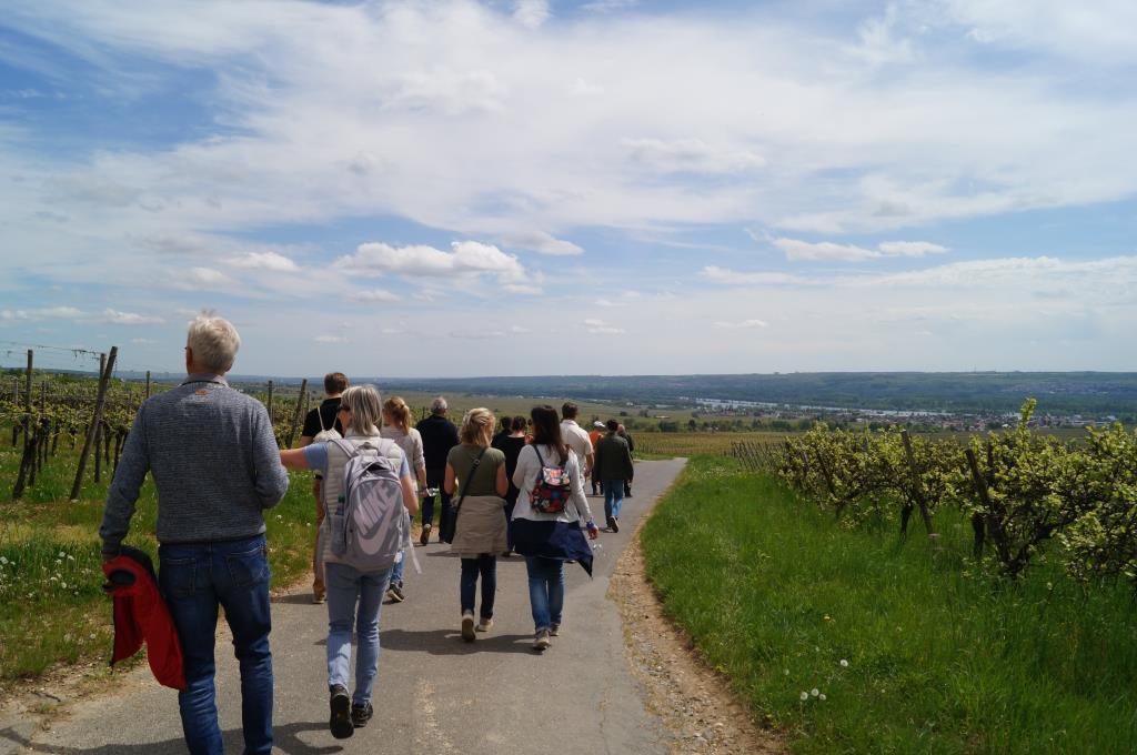 Riesling Walk