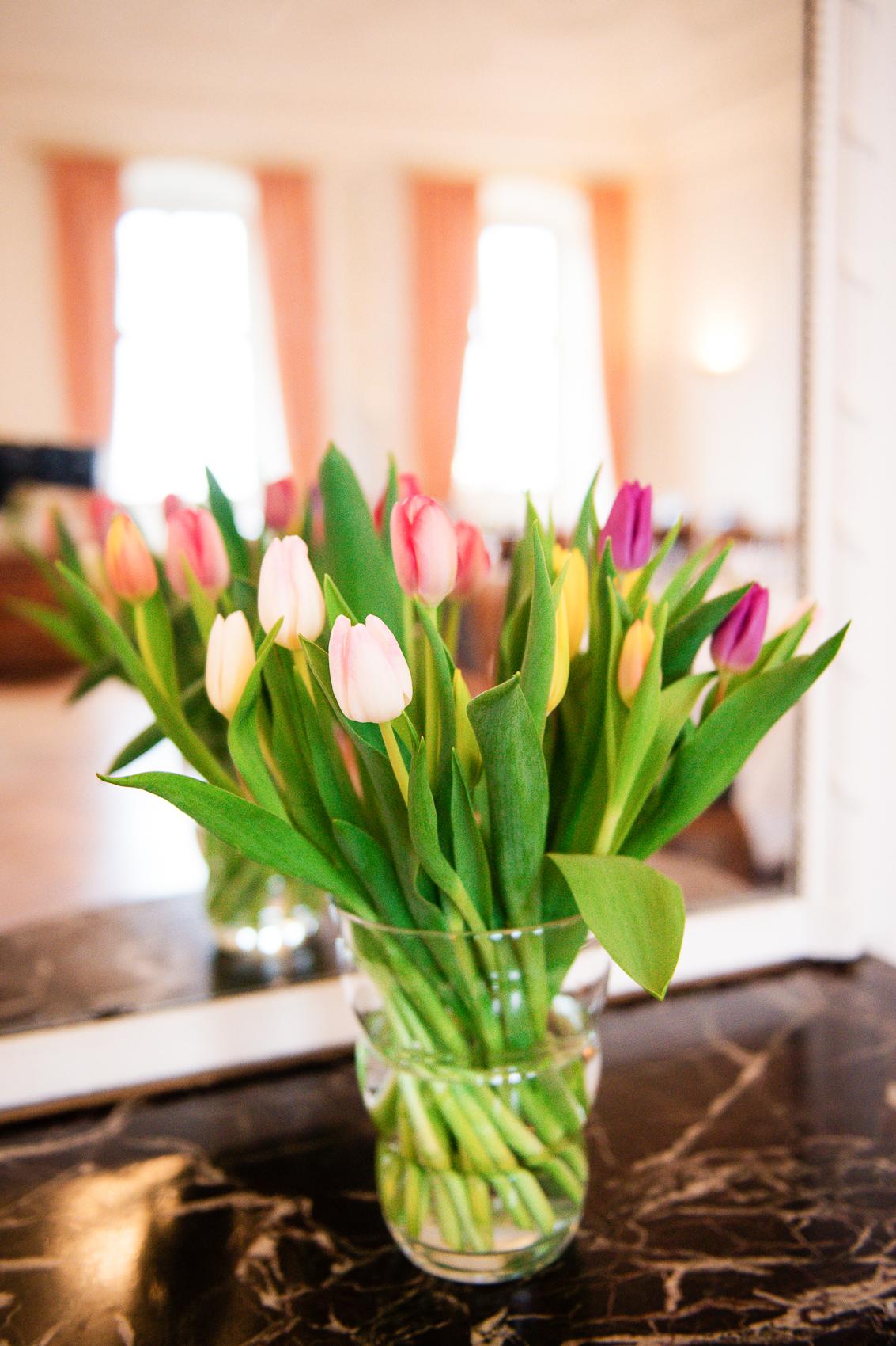 Greiffenclausaal Tulpen